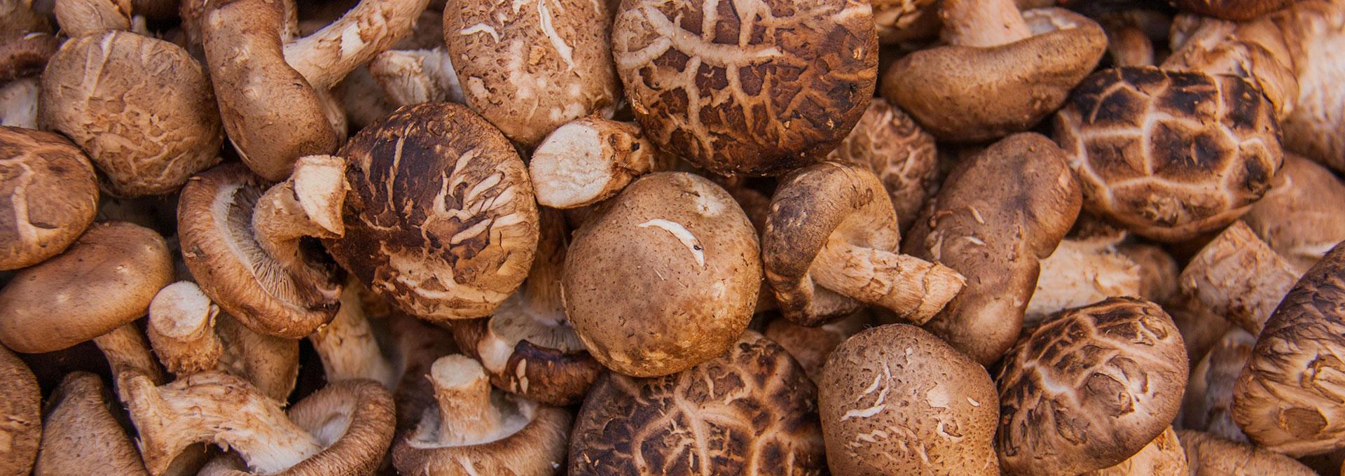 Funghi San Giorgio, fresco, BIO, Italiano