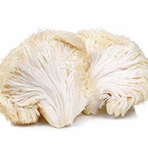 Funghi Hericium Erinaceus